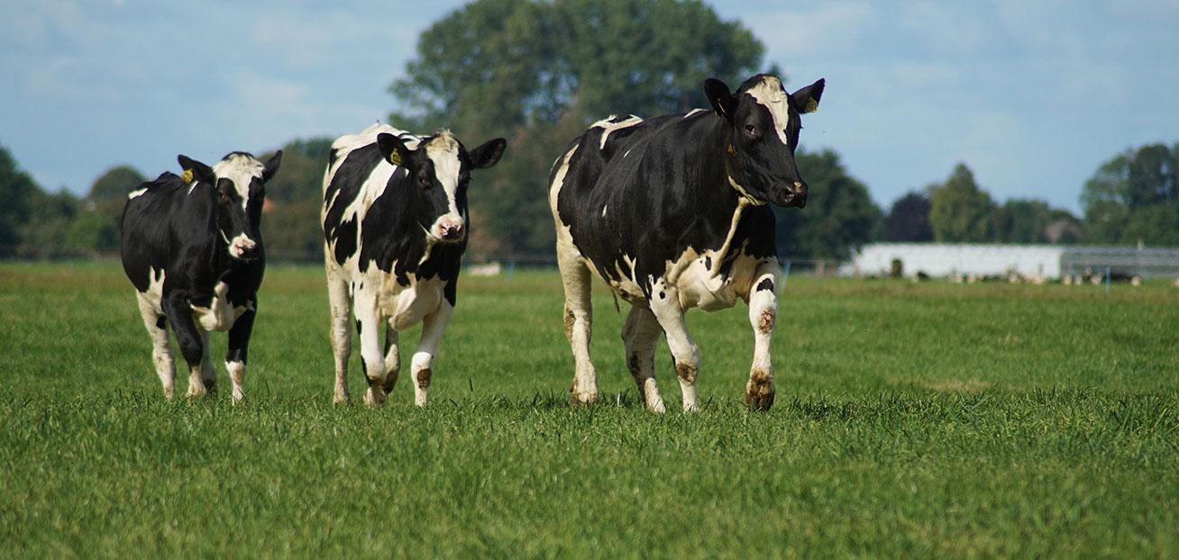 Bc Farm Amp Ranch Realty Corp